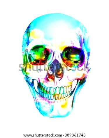 Single human skull illustration - stock photo