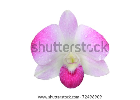 single isolated orchid on white background with drop of water