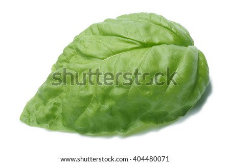 Single large basil leaf, Bolloso Napoletano cultivar. Separate clipping paths for both leaf and shadow, infinite depth of field