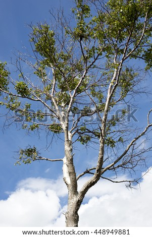 single leafed tree against a blue cloudy sky - stock photo