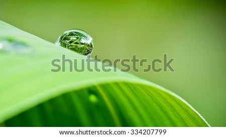Single Live Concept. Dew at leaves