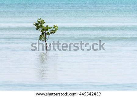 single lone tree in the calm ocean swell in the background.