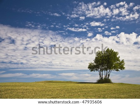 Single Lone Tree On Top Of Hill With Clouds In The Background - stock photo