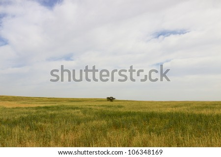 Single lonely tree on a meadow of grass - stock photo