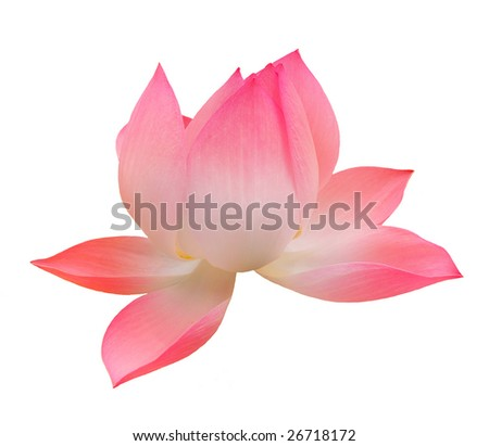 Single Lotus isolated over white