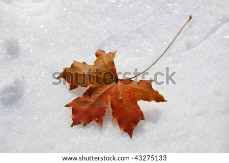 Single maple leaf in the snow - stock photo