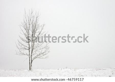 Single oak tree in snow - stock photo