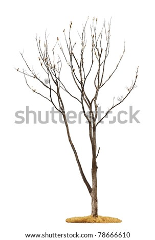 Single old and dead tree with white parrots on the branches isolated on white background - stock photo