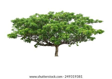 Single old large tree isolated over white background - stock photo