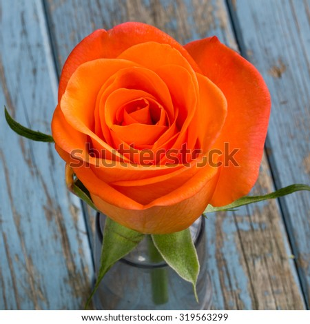 single orange rose on turquoise vintage wooden background with copyspace - stock photo