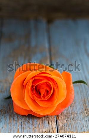 single orange rose on vintage turquoise wooden background - stock photo