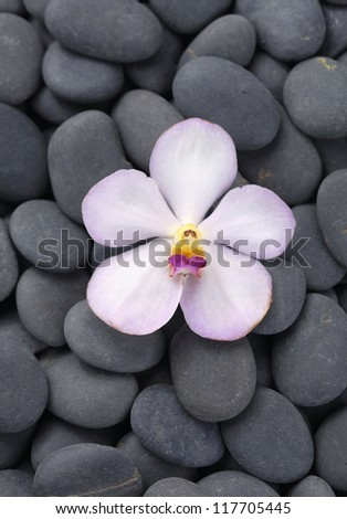 single orchid on pebbles background