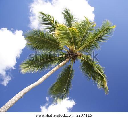 Single palm against the sky - stock photo