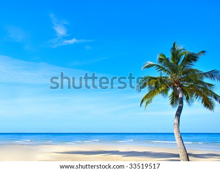 Single palm as flower  on the empty beach, blue water and  sky background - stock photo