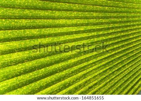 Single Palm Frond as a Background or Wallpaper - stock photo