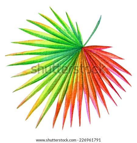 single palm leaf watercolor illustration - stock photo