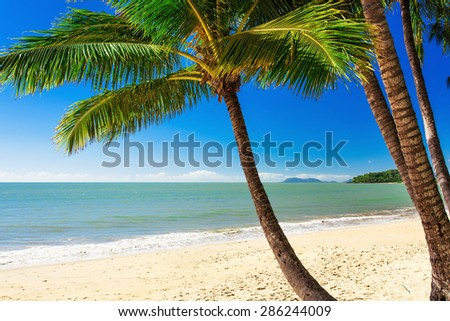 Single palm tree at Palm Cove beach in north Queensland, Australia - stock photo