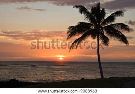 Single Palm tree framing a Hawaiian Sunset