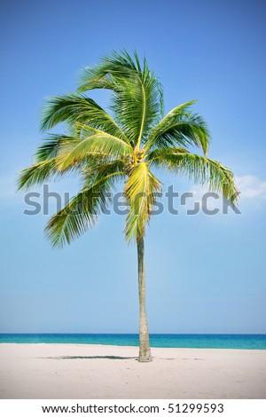 Single palm tree on a tropical beach - stock photo