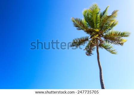 Single palm tree on clear blue sky background - stock photo