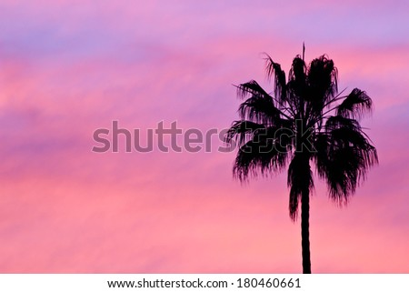 single palm tree sunset silhouette