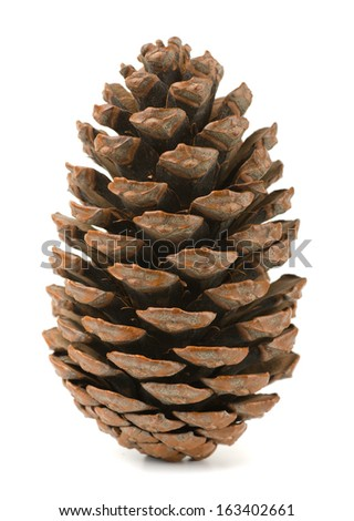 Single pine cone isolated on white - stock photo