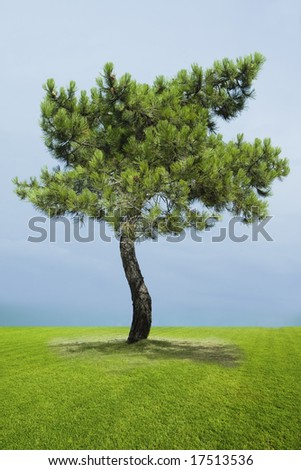 Single pine tree on green grass