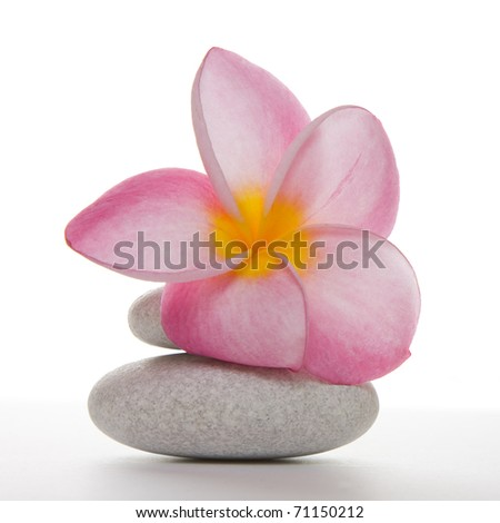 Single pink frangipani or plumeria flower on two white pebbles, Isolated over white in studio. - stock photo