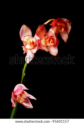 single pink orchid - stock photo