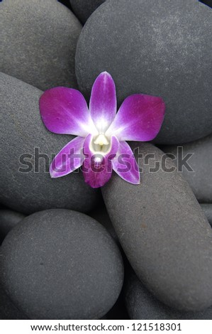Single pink orchid and stones - stock photo