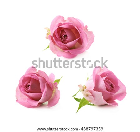 Single pink rose bud isolated over the white background, set of three different foreshortenings