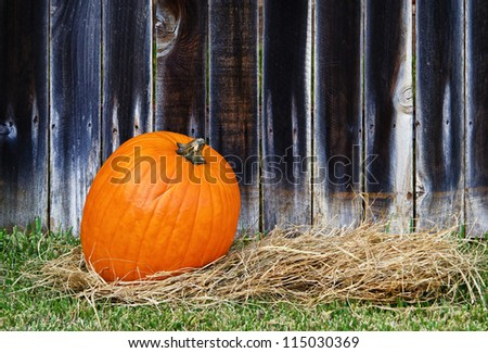 Single pumpkin on hay against wooden fence