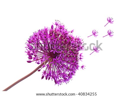 Single purple Alliums Ornamental Onions isolated on white - stock photo