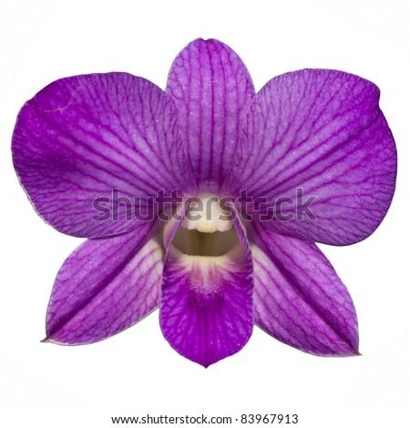 single purple orchid isolate - stock photo