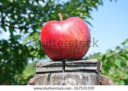 Single red ripe apple on a tree stump, on a sunny summer day. Concept of target, nature, environment, clean/healthy eating. - stock photo