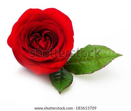 Single red rose flower with leaf on white background - stock photo