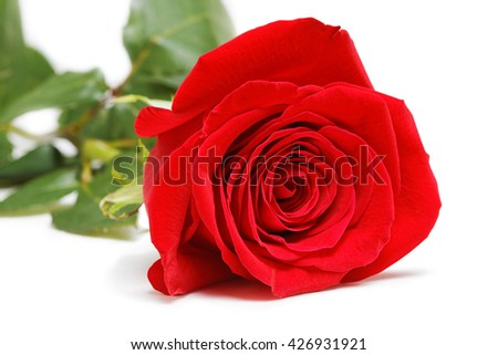 Single red rose isolated on white background. Selective focus. - stock photo