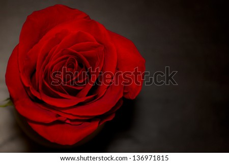 Single red rose on a dark wooden table from top view. - stock photo