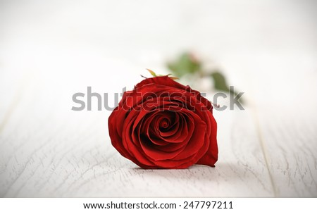 Single red rose on a wooden background. Valentine Day background - stock photo