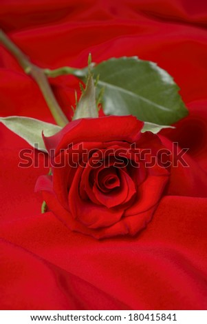 single red rose on red background  - stock photo