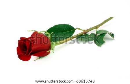 Single red rose on stem with green leaves - stock photo