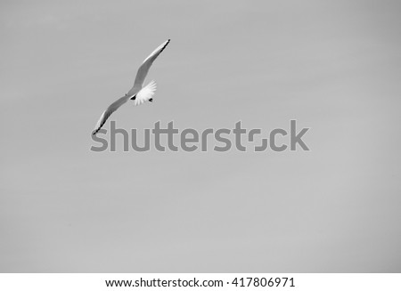 Single seagull in flight on grey sky - stock photo