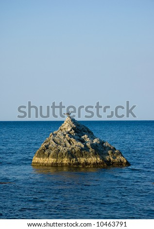 Single  seagull on rock in sea on sky background