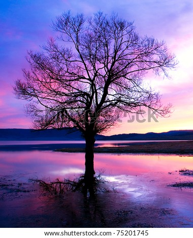 single silhouette tree in dusk time - stock photo