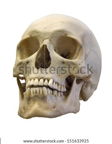 single skull isolated on white background - stock photo