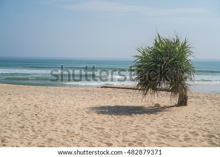 Single small palm tree hanging on sandy beach over sea and sky background during summer day