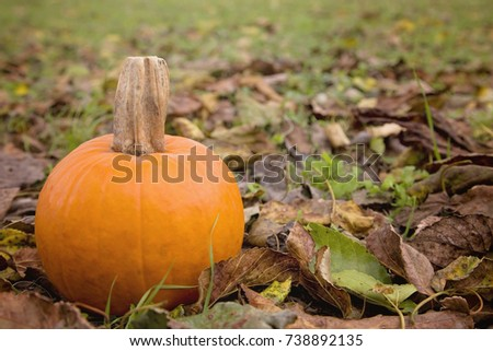 Single Small Pie Pumpkin in a Bed of Fall Leaves