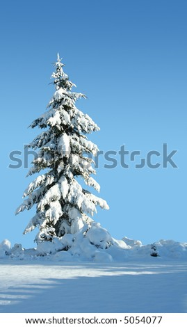Single snow covered evergreen against a polarized blue sky. - stock photo
