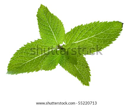 Single Sprig Fresh green mint close up isolated on white background