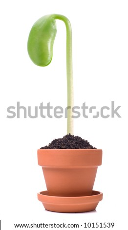 Single sprout in small pot. Isolated on white background. - stock photo